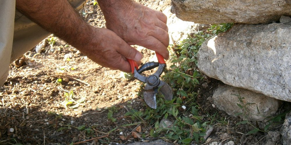 Cleaning of the archaeological sites